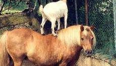 amicizia-animali